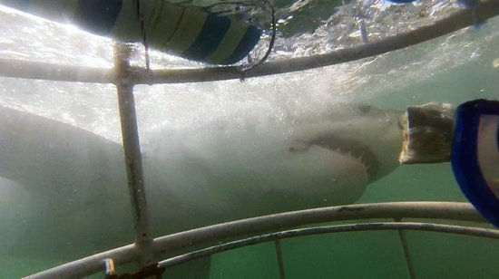 White Shark Ventures : In the cage
