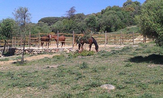 E3 Endurance Equestrian Experience: Paddock E3 im Frühling 2014