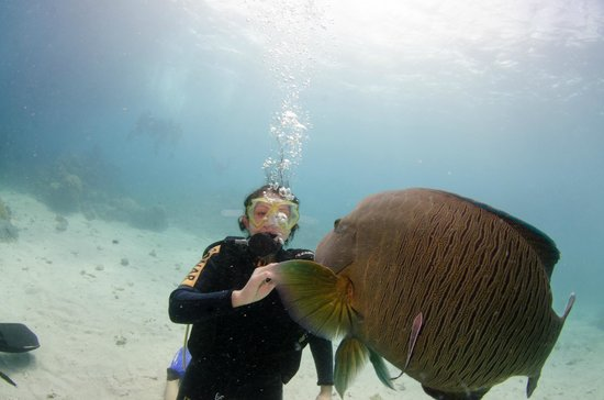 Deep Sea Divers Den Day Trips : High Five!