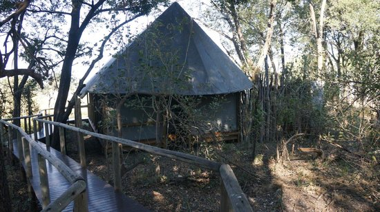 Chitabe Lediba Camp : Our tent.