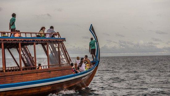 Sheraton Maldives Full Moon Resort & Spa: Sunset Dolphin Cruise