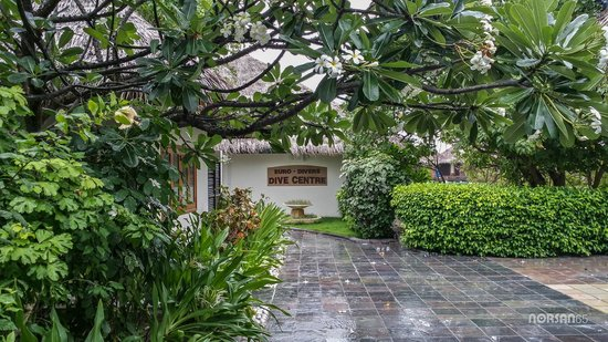 Sheraton Maldives Full Moon Resort & Spa: Lush Greenery