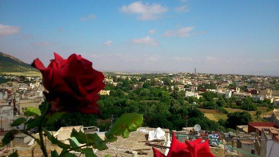 Dar KamalChaoui : Vue de la terrasse