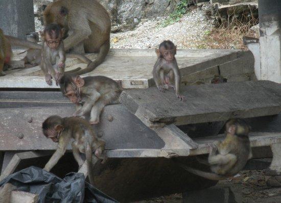 Chopsticks Hill (Khao Takiab): The Family