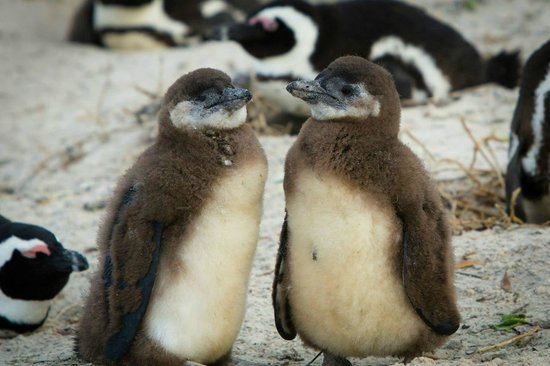 Photography Tours: Baby Penguins