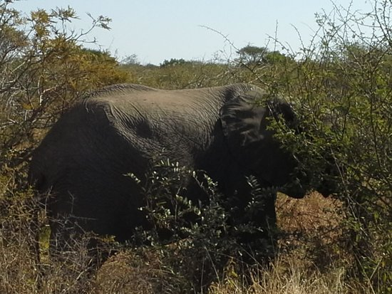 Grand Kruger Lodge: elephant