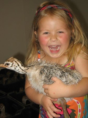 Highgate Ostrich Show Farm: Kids love the baby chicks !!