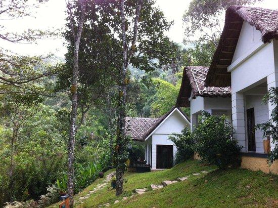 Niraamaya Retreats Cardamom Club - Thekkady : a few of the cottages