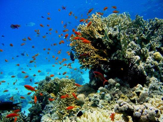Diving Center Dive Club Italiano : Vita sottomarina