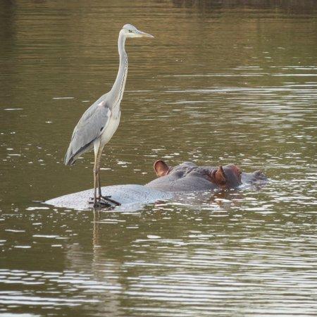 Rhino River Lodge: catching a ride