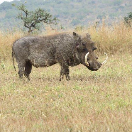 Rhino River Lodge: hog