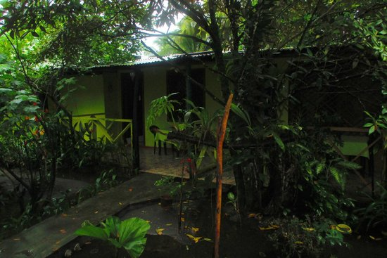 Cabinas El Icaco Tortuguero: El Icaco´s garden