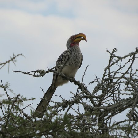 Rhino River Lodge: Hornbill