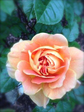 Creacon Wellness Retreat: Peach Roese