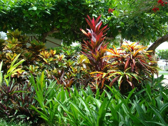 Grand Mirage Resort and Thalasso Bali: территория отеля