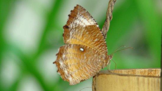 Grand Mirage Resort: Природа Бали. В отеле бабочки летают