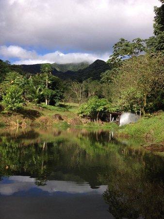Cataratas Bijagua Lodge: Los jardines