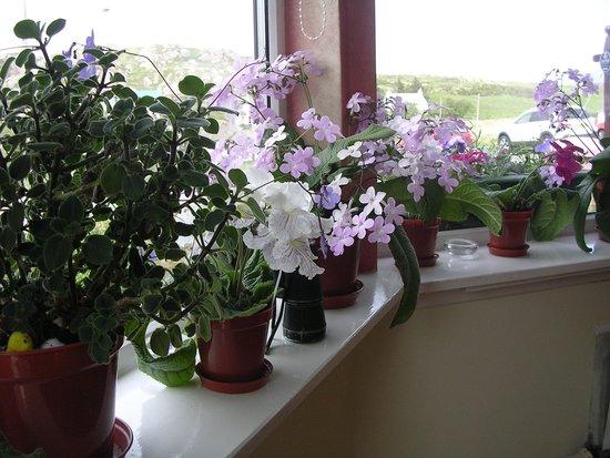 Seaview Bed & Breakfast: Flowers in the breakfast room