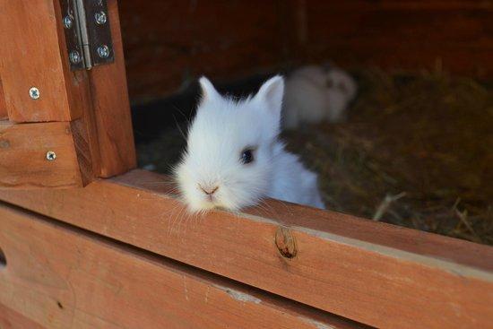 Agriturismo Casa Aurora: Il recinto dei conigli dietro il B&B