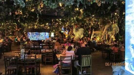 Disney Springs: The Rainforest Cafe