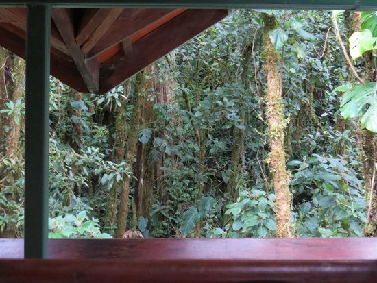 Los Quetzales Lodge & Spa : View of cloud forest from bathroom window-spectacular