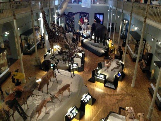 Museo Nacional de Escocia: Животный мир