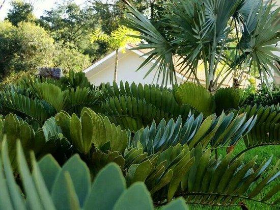 Wish Resort Foz do Iguaçu: Muito verde e ar puro.