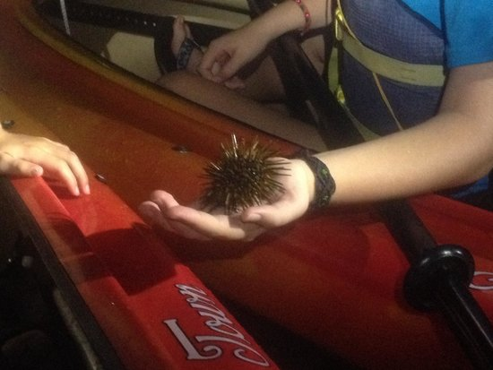 Blue Planet Kayak Eco-Tours : The youngest (8) holding a sea urchin!