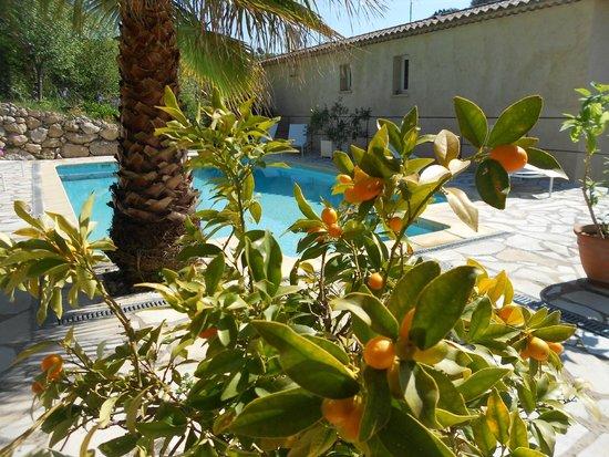 LE MAS DE FRAYERE : piscine