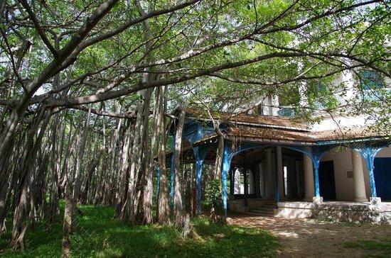 The Huddleston Gardens of Theosophical Society : Pavillion under the banyan