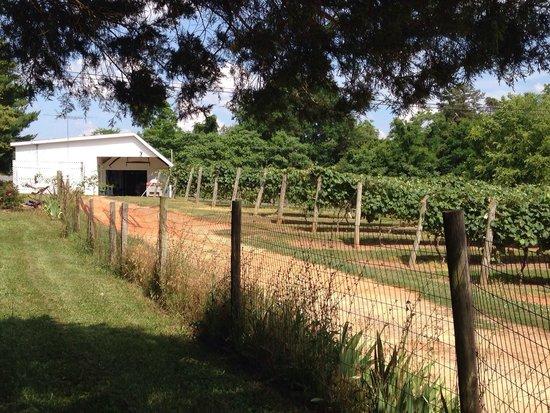 Bright Meadows Farm