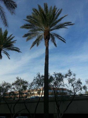 DoubleTree Suites by Hilton Hotel Phoenix: DoubleTree Suites grounds