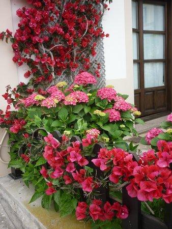 Hotel La Boriza: flores del hotel