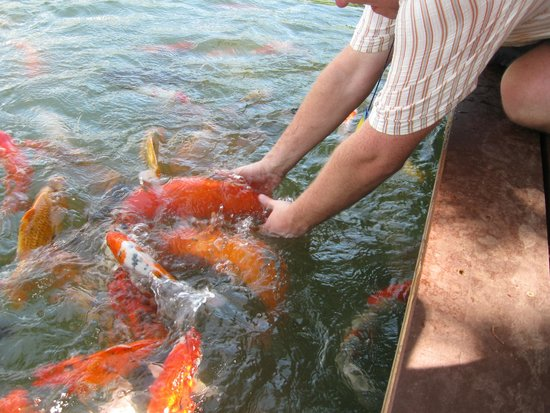 Phuket Botanic Garden: Держи её!