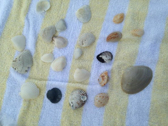 Sundial Beach Resort & Spa: Shells from the beach