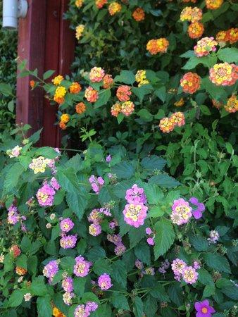 Domotel Agios Nikolaos: Flowers - colors