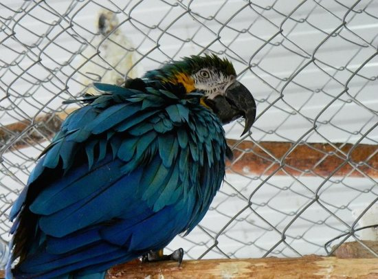 World Parrot Refuge: Anonymous Inmate