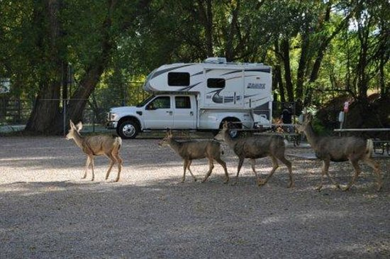 Pikes Peak RV Park & Campground: Local Wildlife