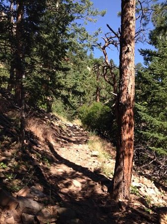 Flatirons : lots of shade & trees going uo toward Royal Arch Trail.
