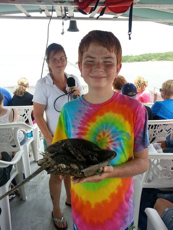 Rover Boat Tours - Carolina Rover: Horseshoe crab lesson was fun