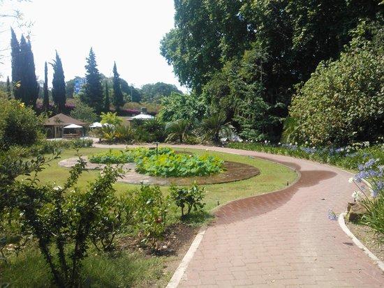 Jardin botanico historico de malaga bild fr n la for Conception jardin