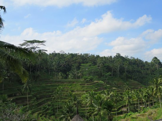 Tegalalang Rice Terrace: terrace
