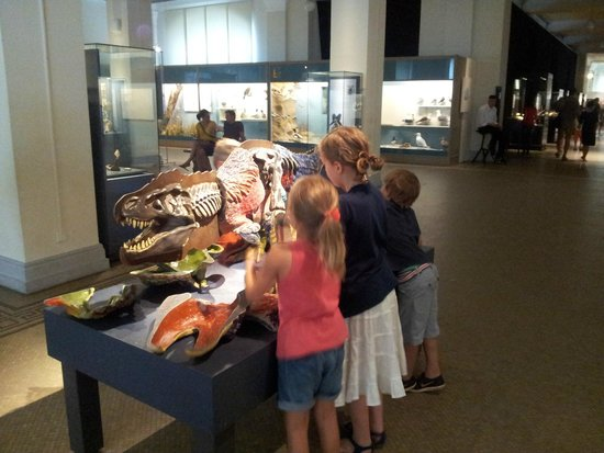 Museum für Naturkunde: Детям будет интересно