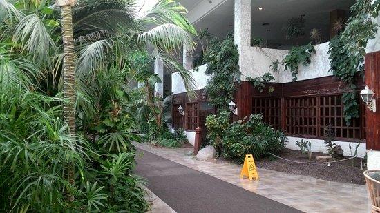 Hotel Best Tenerife : Begroeiing in de hal