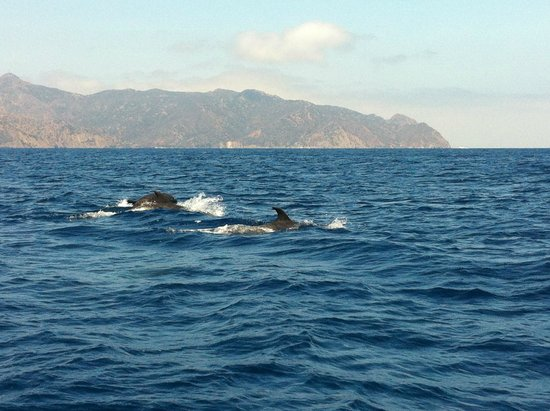 Catalina Island Company: fun tour