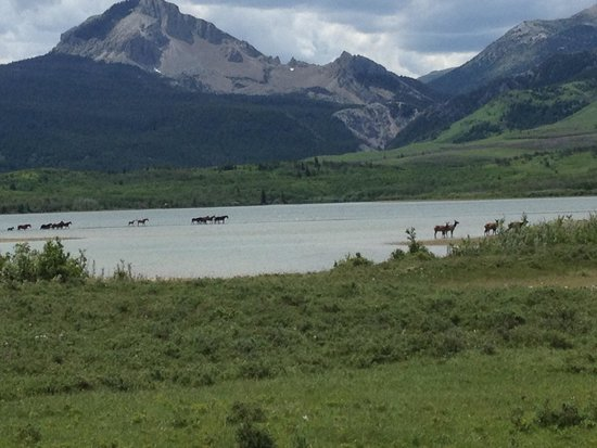 Bear Creek Ranch: Horn lake, rare view of horses to the left and Elk to the right