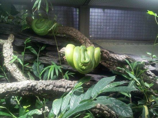 Berlin Zoological Garden : Террариум