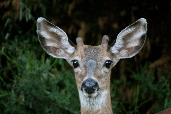WildSpring Guest Habitat: Sweet visitors
