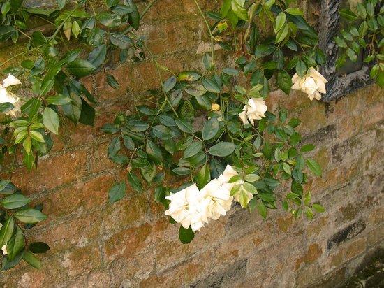 Bottega Dei Sapori: white trailing rose running along the wall