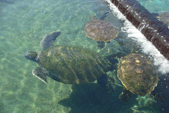 Underwater Observatory Marine Park : Черепашки